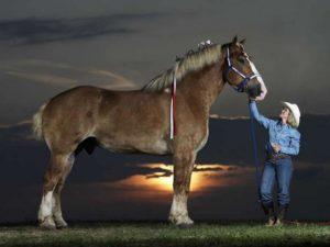 Конь Лошадь Биг Джейк