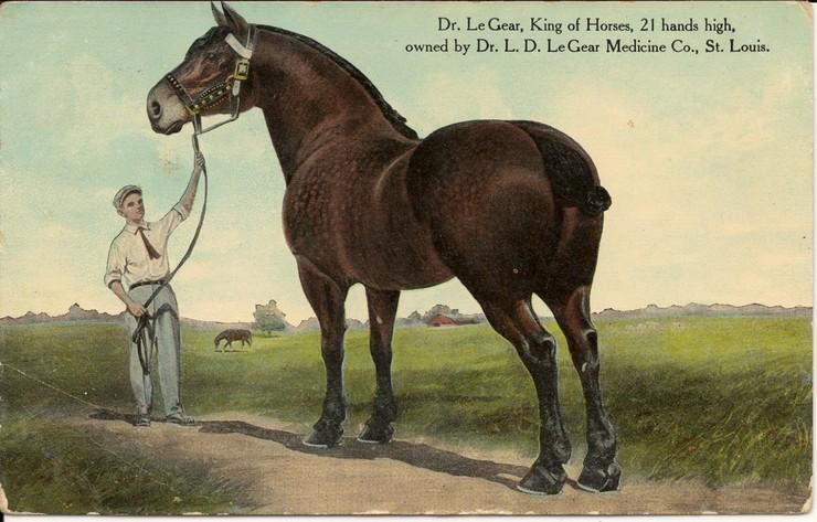 лошадь пароды Ле Жер