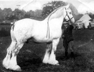 конь Большой Сампсон