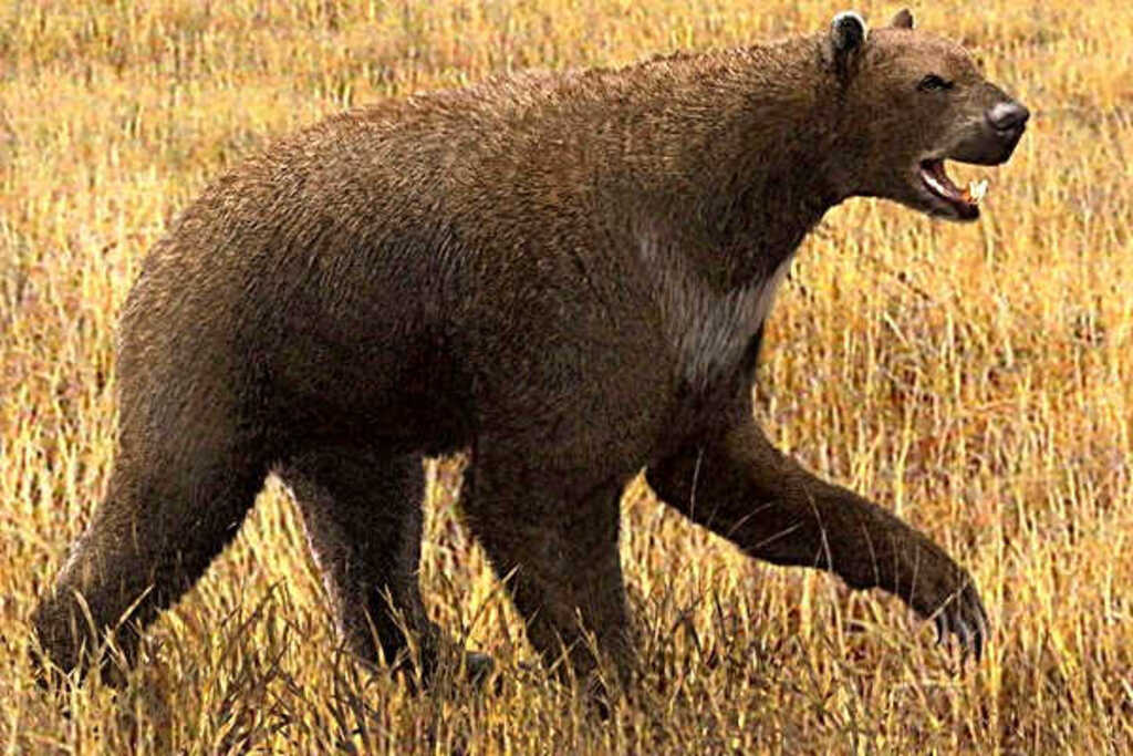 Короткомордый медведь