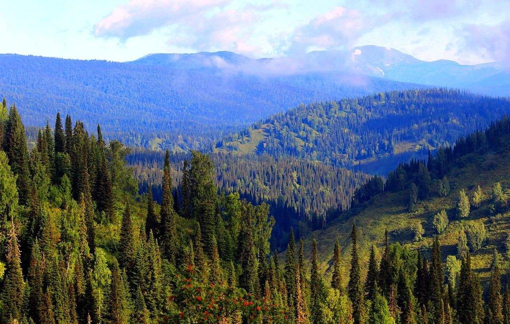 самый большой лес в мире тайга