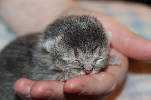 Миниатюрная кошечка